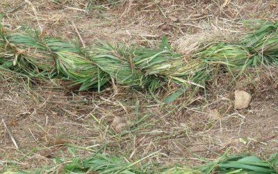 Spirale d'herbe