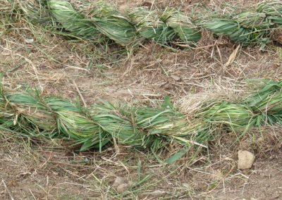 Tressage-herbe 1