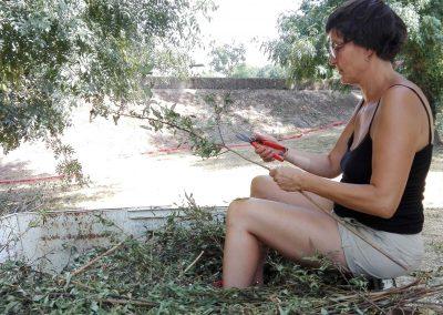 Le bal des samares- Katia dans la benne à préparer l'osier