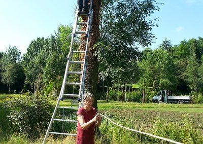 Bambou et échelle bien utiles...